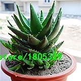 Pinkdose® 200 Aloe Mix Graines - Excellentes plantes d'intérieur succulentes SEED ALOE VERA: 1