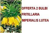 OFFERTA 2 BULBI AUTUNNALI FRITILLARIA IMPERIALIS LUTEA BULBS BULBES