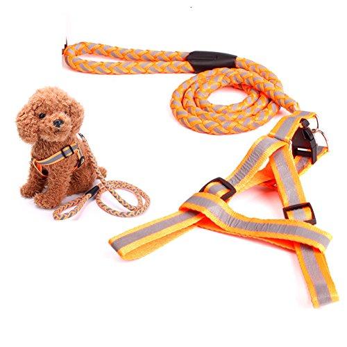 Pet Hund Leash-4Foot Refelective Pet Hunde Leine für mittelgroße Hunde Walking führt und Classic Gurtband mit Overlay-Hundegeschirr für Hunde, Medium, Orange -