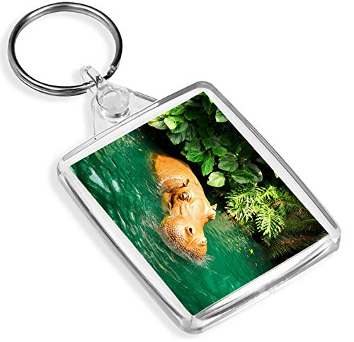 Ehrfürchtig Hippopotamus Keyring Hippo Dangerous Wild Animal Tier-Geschenk # 16021