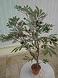 künstliches Oliven Bäumchen ca. 80cm.hoch