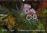 Rotes Meer - Unterwasserimpressionen (Wandkalender 2018 DIN A3 quer): Impressionen aus dem Rotes Meer, Tauchen (Monatskalender, 14 Seiten ) (CALVENDO Natur) [Kalender] [Apr 01, 2017] Eberschulz, Lars