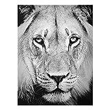 PPS. Imaging Druck auf Glas Wall Art–OLD LION–Hohe 4: 3Druck auf Glas, Glas Druck, Glas Bild, Wandbild, Glas Bild, Wandbild, Glas Wandbild, Glas-, Wandbild, Dimension HxB: 100cm x 70cm