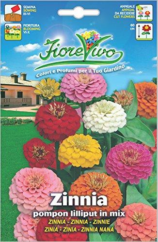 Hortus 60SDFZ034 Fiorevivo Zinnia Pompon Lilliput, Mix, 13x0.2x20 cm