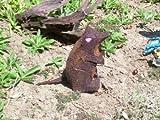3D Tier 3D Target stehende Ratte für Bogenschützen