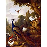 Wee Blue Coo Nature Animal Birds BOGDANI Peacock Parrot Canary Park Poster Print