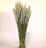 Séchées Bouquet de blé - Séché (blé) tendre Bouquet-récolte 2014 - Brins: environ 70 cm de long - Environ 90 par bouquet floral - Fleurs séchées-Soins/graminées après fournies - Prêt pour utilisation des arrangements floraux et des Arts et de l'artis...
