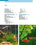 Kleine Aquarien: Extra: Nano-Aquarien - 2