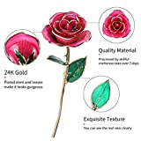 Gifts for Her, ZJchao Long Stem 24k Gold Trimmed Pink Rose Flower Gift with Clear Display Stand