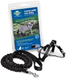Premier Pet COME WITH ME KITTY Cat Harness and Bungee Leash Black Large