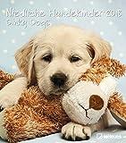 Niedliche Hundekinder 2018 - Broschürenkalender, Hundekalender, Tierkalender 2018 - 30 x 34 cm