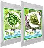 BIO Basilic & Thym - Graines de plantes aromatiques/Intérieur & Extérieur