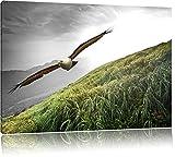 Majestic Bald Eagle Nero / Bianco, Dimensioni: 120x80 su tela, XXL enormi immagini completamente Pagina con la barella, stampa d'arte sul murale con telaio, più economico di pittura o un dipinto a olio, non un manifesto o un banner,