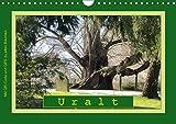 Uralt - Mit QR-Code und GPS zu alten Bäumen (Wandkalender 2019 DIN A4 quer): ALTE BÄUME - knorrig, verwittert, mystisch und schön (Monatskalender, 14 Seiten ) (CALVENDO Natur)