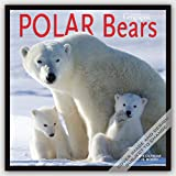 Polar Bears 2016 - Eisbären - 16-Monatskalender: Original BrownTrout/Wyman Publishing-Kalender [Mehrsprachig] [Kalender]