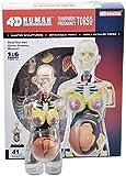 FANg Indossatrice 4D Trasparente Organi Modello anatomico Umano Incinta Modello di Yoga Donne pelvico Insegnamento