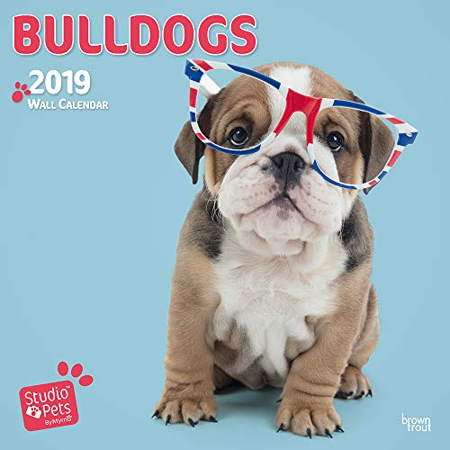 BULLDOGS BY STUDIO P 2019 SQUARE WALL CA por BROWNTROUT UK