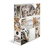 Herma 7166 Karton Motivordner DIN A4, Serie Tiere, Design Katzen, 70 mm breit, 1 Ordner, mit Innendruck