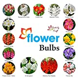 #9: Flower Bulbs 15 MEGA Pack with Various Beautiful Flower Bulbs Exclusive Combo for Beautiful Home and Balcony Gardening by Kraft Seeds