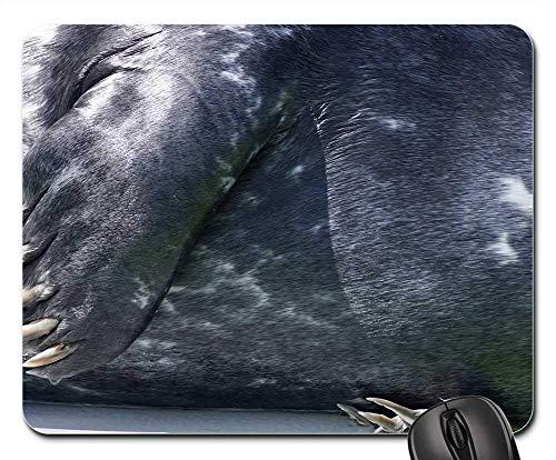 Gaming-Mauspads, Mauspad, Seal Claw Fin Aquarium Wasserdichtungsstation