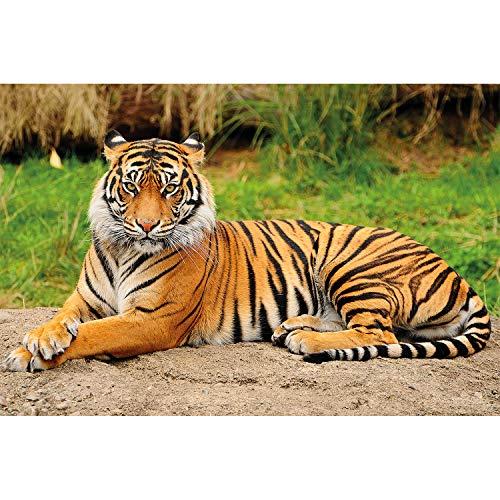 GREAT ART XXL Poster - majestätischer Tiger - Wandbild Dekoration Panthera Tigris Raubkatze Wildkatze Wildtiere Großkatze Tierbilder - Wandposter Fotoposter Wanddeko Bild Wandgestaltung Motiv (140 x 100 cm)
