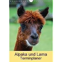Alpaka und Lama Terminplaner (Wandkalender 2018 DIN A4 hoch): Neuweltkamele aus Südamerika (Planer, 14 Seiten ) (CALVENDO Tiere) [Kalender] [Apr 01, 2017] Kattobello, k.A.