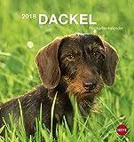 Dackel Postkartenkalender - Kalender 2018
