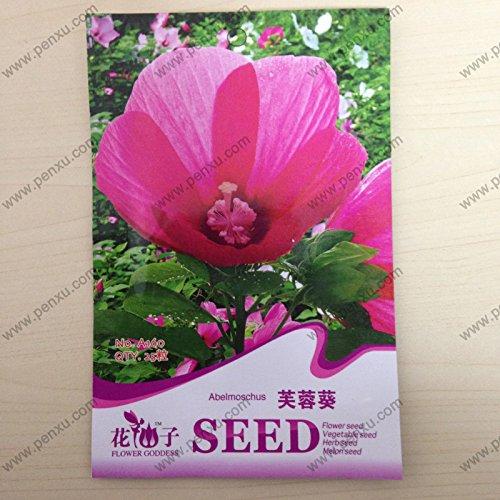 Original pack europe semi di vaniglia semi di vaniglia perenni erba di primavera erba aromatica vaniglia, semi di fiori balcone - 60 pezzi