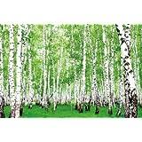 Bosco di betulle - XXL quadro murale bosco di betulle 210 cm x 140 cm