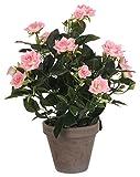 MICA Decorations 948332 Blumen, Rose, rosa