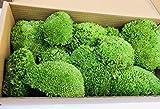 Caja de musgo 100 % preservada, 250 g, musgo 100% conservado. Colores: verde claro, verde oscuro (otros colores a petición), 1 caja de embalaje de 40 cm x 20 cm x 10 cm - 250 g. - 100% Preservado polo musgo larga vida útil. El musgo puede man...