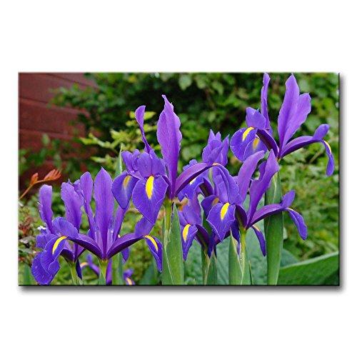 Leinwanddruck Bild für Home Decor Deep Purple Iris Gemälde Moderne Giclée-gespannt und gerahmt Artwork Öl der für Wohnzimmer Dekoration Blume Bilder Foto Prints auf Leinwand (Iris-bild Purple)