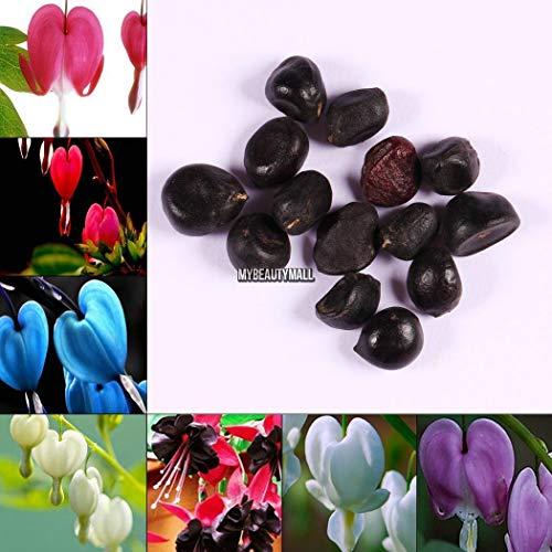 Portal Cool Pink: 10 Stück Seltene Multicolor Blutendes Herz Samen Dicentra Spectabilis My8L (Herz Blutendes)