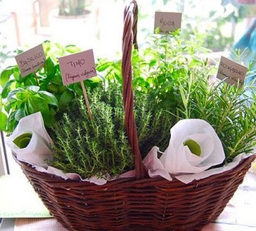 The Gift Box Herb Plant Garden Hamper - UK Mainland only