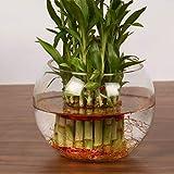 Home Centre Glass Fish Bowl - Multicolour