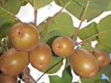 Albero di limone con foglie malate domande e risposte for Albero di kiwi