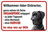 Schild Vorsicht Deutsche Dogge - Willkommen lieber Einbrecher (20x30cm)
