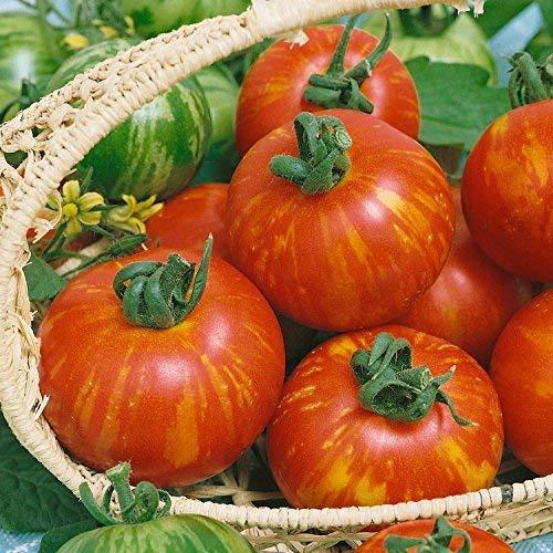 seekay Tomate Tigerella 100 Samen