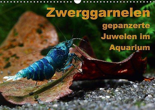 Zwerggarnelen - gepanzerte Juwelen im Aquarium (Wandkalender 2017 DIN A3 quer): Ein Jahr lang jeden Monat eine wunderschöne Garnele (Monatskalender, 14 Seiten ) (CALVENDO Tiere)