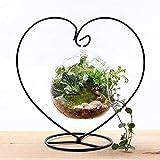 Terrarium en verre à suspendre par Cupcinu - Vase en forme de bulle d'air pour plantes, jardin miniature, cactus, mousse, bougies chauffe-plat, plantes grasses, décoration de jardin intérieur et maison, Verre borosilicate, Big, Small