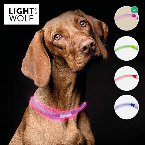 riijk LED Leuchthalsband für Hunde Katzen regenfest (Neue Technologie, kein Schlauch) Halsband USB wiederaufladbar - für mehr Sicherheit