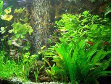 Aquarienpflanzen Set für ein 100 l Aquarium