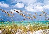 Fototapete National Geographic OCEAN BREEZE 368x254 Dünen Meer Gras Sand Natur