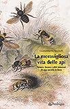 Image de La meravigliosa vita delle api. Amore, lavoro e altri interessi di una società in fiore