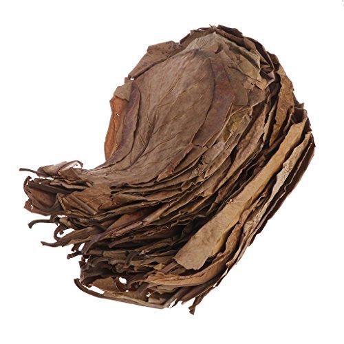Xuniu 50 Stücke Natürliche Catappa Blätter Mandelblatt Fisch Reinigung Behandlung Aquarium Tank - Behandlung Blatt