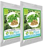 BIO/ORGANICO Cilantro - Semillas ecológicas de plantas naturales/Interior & Exterior