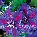 SwansGreen Bonsai Climbing Clematis Baumsamen (Nicht-Birnen) Garten-Geschenk, Staudenpflanz Seltene Blumensamen für Courtyard Terrace 100Pcs 23