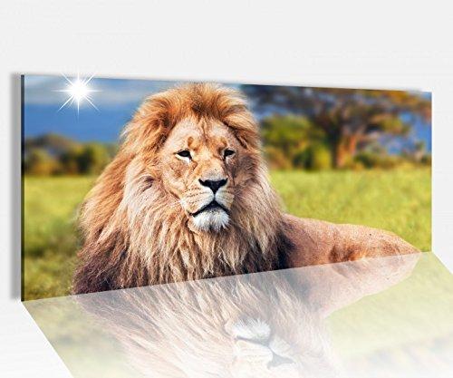 Acrylglasbild 100x40cm Löwe Mähne Afrika Tier stolz Acrylbild Acryl Druck Acrylglas Acrylglasbilder 14A8194, Acrylglas Größe1:100cmx40cm