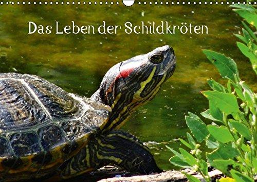 Das Leben der Schildkröten (Wandkalender 2018 DIN A3 quer): Einzigartige Reptilien: Land- und Wasserschildkröten (Monatskalender, 14 Seiten ) ... [Kalender] [Apr 01, 2017] kattobello, k.A.