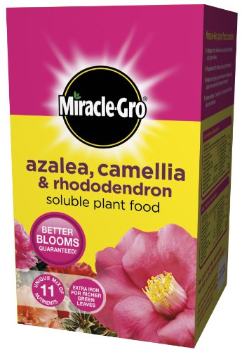 miracle-gro-azalea-camellia-and-rhododendron-soluble-plant-food-carton-1-kg